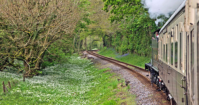 Steam train, South Devon by Unique Devon tours