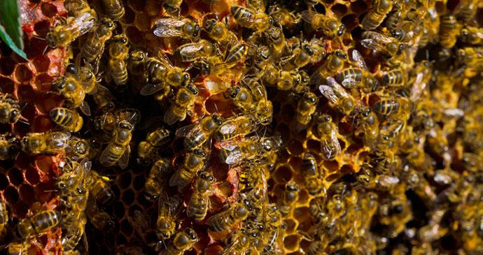 Quince Honey Farm North Devon UK by Flickr wet weather devon