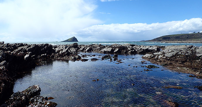 Rock pools in Wembury, South Devon by Devon Wildlife Trust