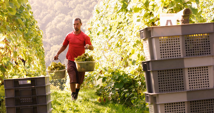 Sharpham Vineyard, South Devon by Sharpham Wine and Cheese