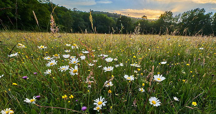 Meadow, UK © Matthew J Thomas, Shutterstock