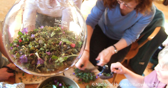 Wild Medicine Wild Times UK by Nathaniel Hughes/Intuitive Herbalism