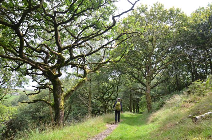 Woodland The Wilderness Cookbook Phoebe Smith