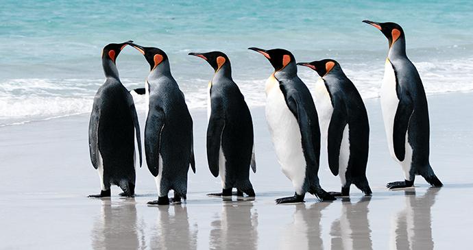 Volunteer Point, Falkland Islands by Richard Burn, Shutterstock