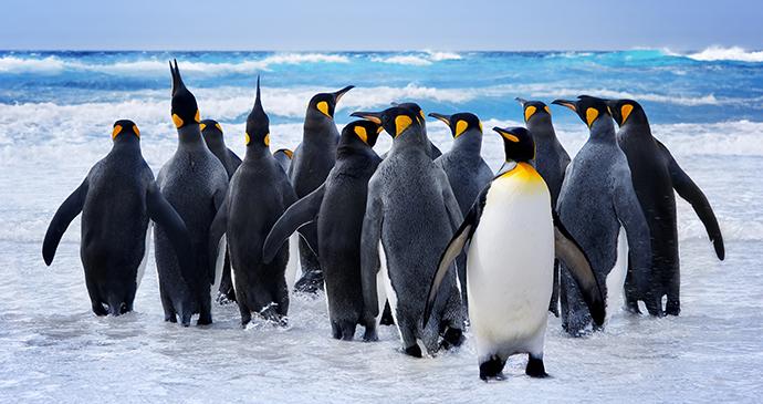 penguins, Pebble Island, Falkland Islands by kwest, Shutterstock