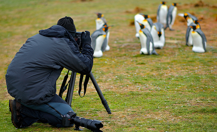 Photography, king penguins, Falkland Islands by Ondrej Prosicky, Shutterstock