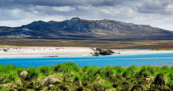 Kidney Island, Falkland Islands by kwest, Shutterstock