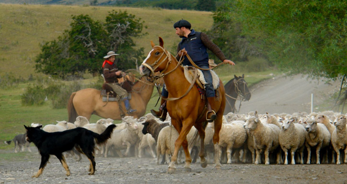 Gauchos mustering sheep, Patagonia, Argentina by Evelyn Proimos, Wikipedia