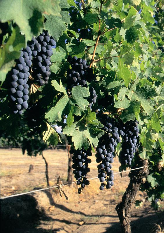 Vineyards, Argentina by Argentinean Tourist Office