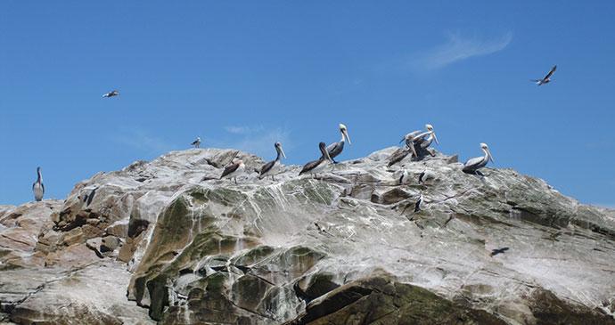 Pelicans, Raúl Marín, Balmaceda, Carratera Austral, Chile by Hugh Sinclair