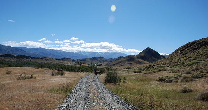 Road, Guanaco, Parque Patagonia, Carretera Austral by Hugh Sinclair