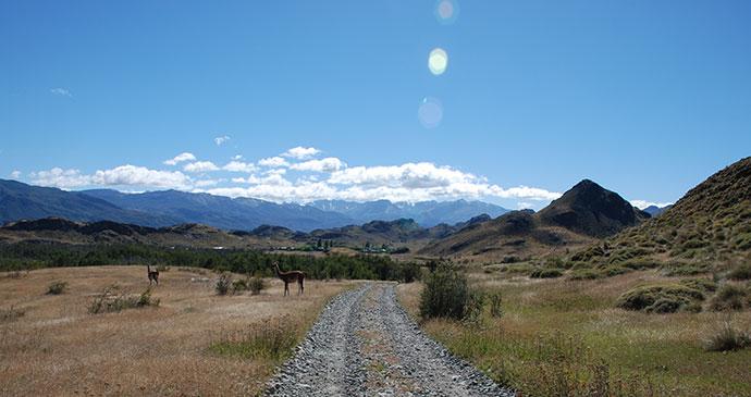 Guanaco Parque Patagonia Chile Carretera Austral by Hugh Sinclair