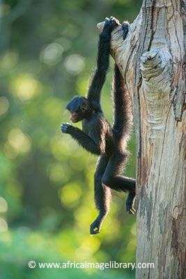 Central Suriname Nature Reserve by Ariadne Van Zandbergen