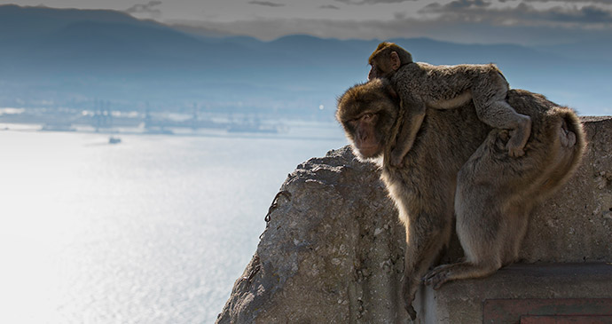 Barbary macaques, Gibraltar, 52 European Wildlife Weekends by Andy Butler