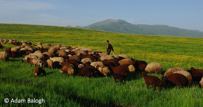 A local shepherd in the countryside surrounding Armenia's capital, Yerevan by Adam Balogh
