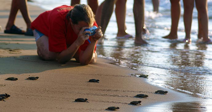 Nesting turtles Alagadi Beach North Cyprus by North Cyprus Tourism Authority