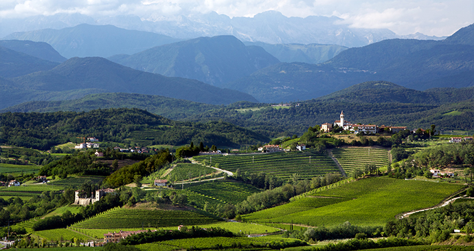 vineyards, Buttrio, FVG by Luigi-Vitale, PTFVG