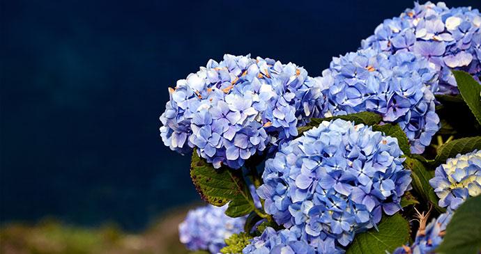 Flores, Azores, Portugal, by unukorno, Flickr