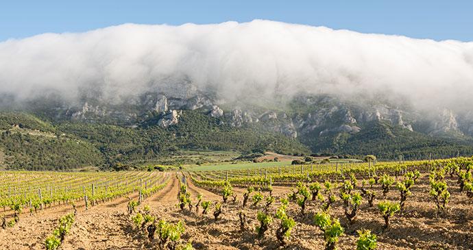 Vineyard Rioja Alavesa Spain Basque Country by Alberto Loyo