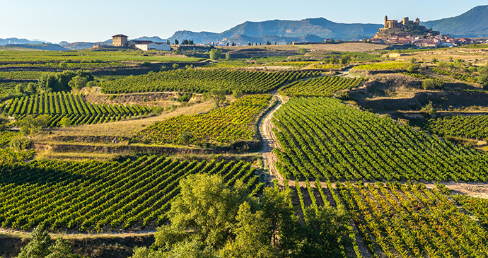 Rioja Alavesa vineyards Spain Basque Country by Alberto Loyo Shutterstock