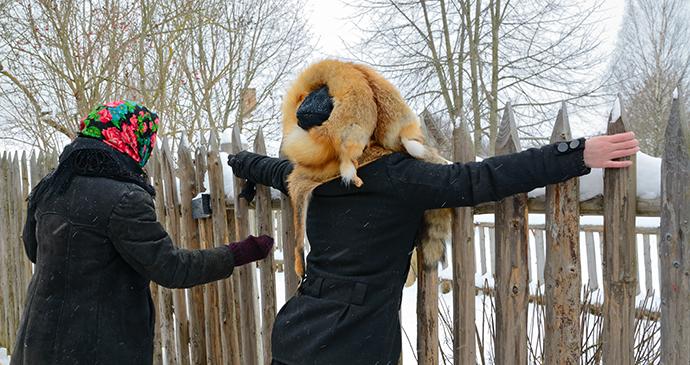 winter climate Belarus Europe by Nataliya Evmenenko Dreamstime