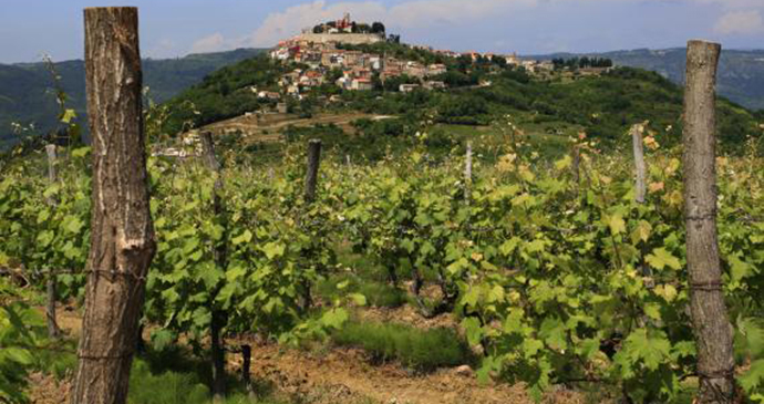 Vineyards, Motovun, Istria, Croatia by Istria Tourist Board