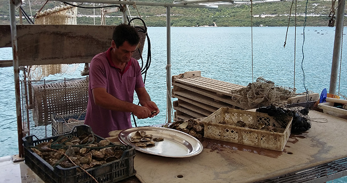 Oyster preparation in Ston, Croatia © Richtone