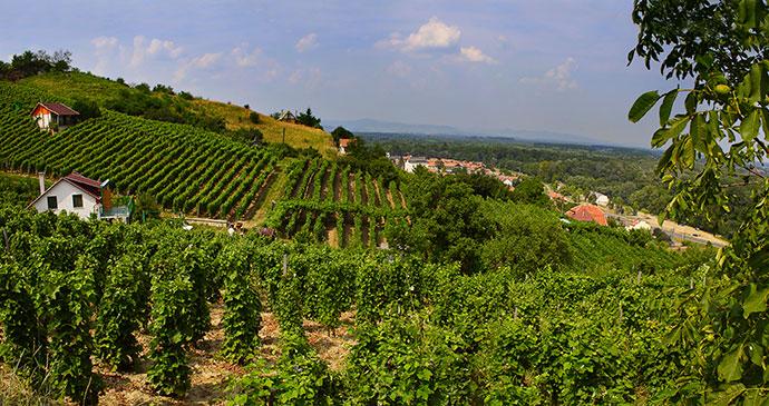 Vineyard Tokaj Hungary Europe by Pecold, Shutterstock