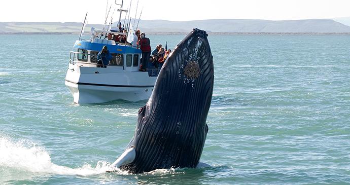 Whalewatching, Húsavík, Iceland by Tatonka, Shutterstock