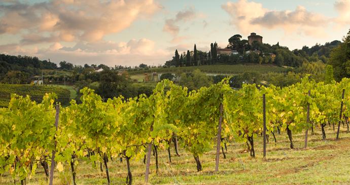Vineyards Emilia-Romagna Italy by Emilia-Romagna Tourist Board
