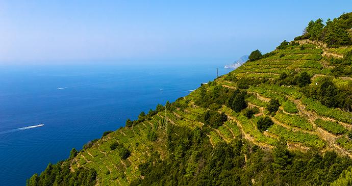 Vineyard, Cinque Terre, Liguria, Italy by Zharov Patel, Shutterstock