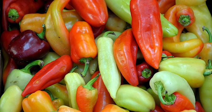 peppers, Kosovo by Ivan S Abrams