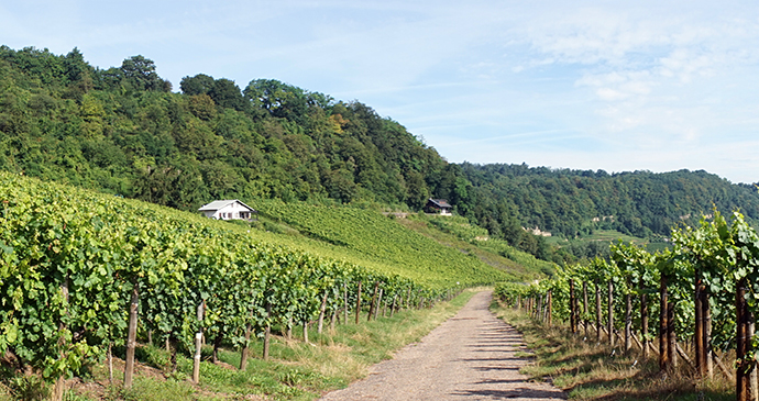 Moselle Valley vineyard Luxembourg by shanin, Shutterstock