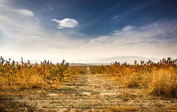 St Trifun's Day Macedonia by © Marjan Lazarevski, Flickr