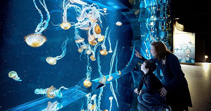 Aquarium meduses, Nausicaa, Pays-de-Calais © J. Alexandre – NAUSICAA