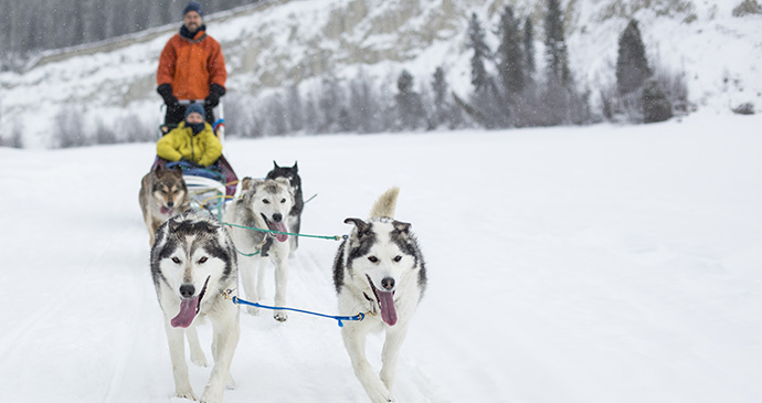 Dogsled, Canada by Visit Canada