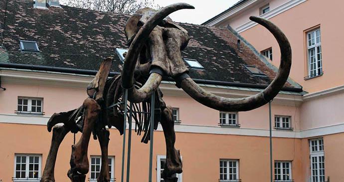 Mammoth, Kikinda museum, Vojvodina, Serbia by Laurence Mitchell