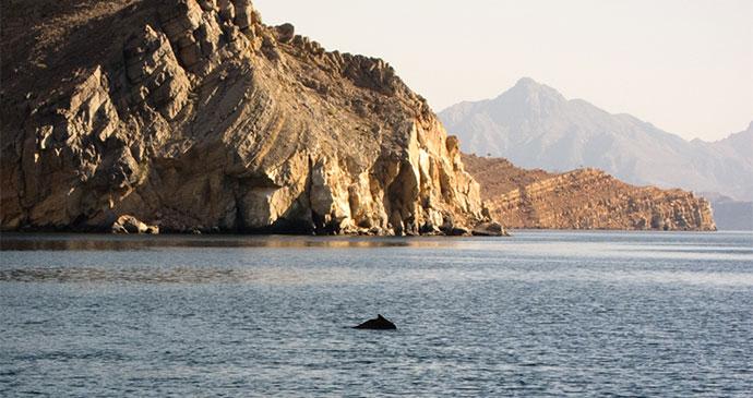 Dolphin watching Musandam Oman by Sarah Dreyer Dreamstime