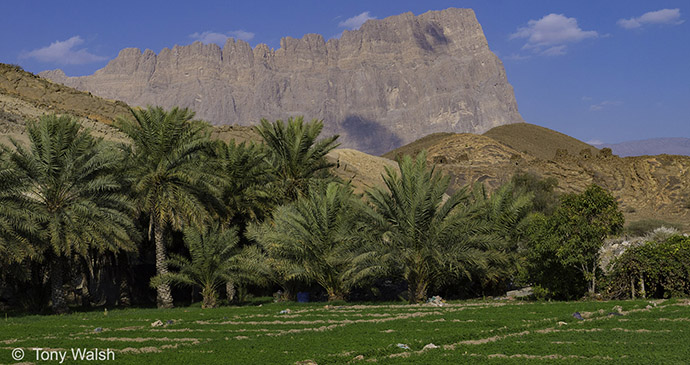Towers at Bat Archaeological site, Oman © Tony Walsh