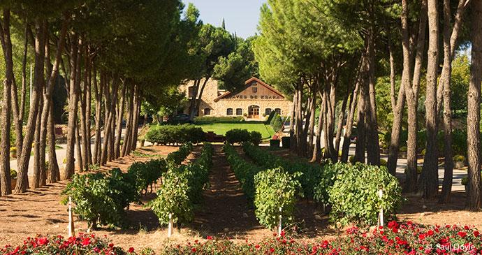 Ksara vineyards, Bekaa Valley, Lebanon © Paul Doyle