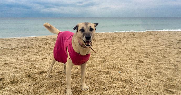 Lucy on Alanya Beach © Ishbel Holmes