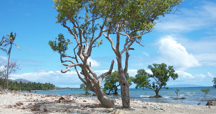 Sugud Mangroves, Philippines © Hannah Stuart-Leach