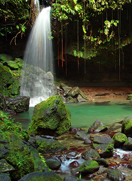 Waterfall into an emerald pool by Celia Sorhaindo Tropical Ties
