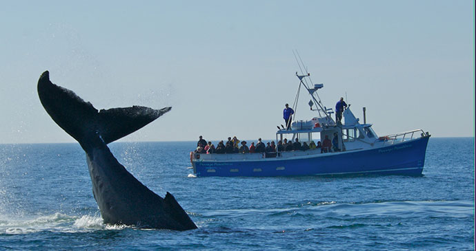 Whale watching in Fundy Bay of Fundy and Annapolis Valley Nova Scotia by Tourism Nova Scotia Canada