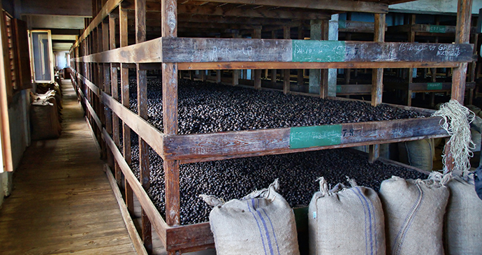 Drying nutmeg at the Gouyave nutmeg processing pool Grenada by Przemyslaw Skibinski Shutterstock