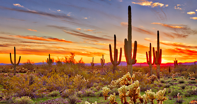 Sonoran Desert Maricopa Sunset Limited USA by Anton Foltin, Shutterstock
