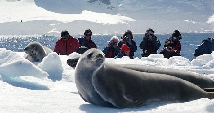 Crabeater seal Antarctica by Tony Soper