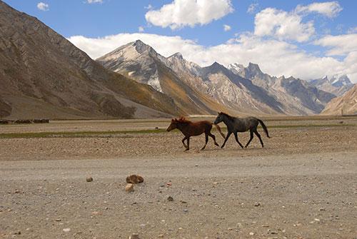 Horses Kashmir Asia by Maximum Exposure Productions
