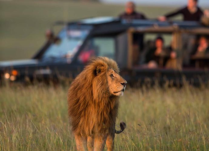 Lion on the Mara North Conservancy, Kenya © Paul Goldstein