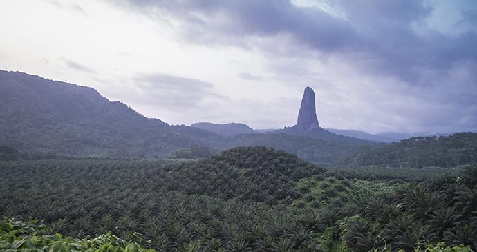Rainforest of São Tomé © Andre Silva Pinto, Shutterstock